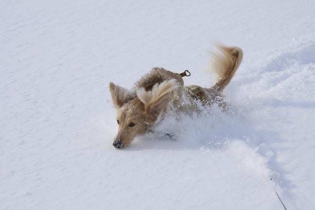 雪の冷たさも平気でつ