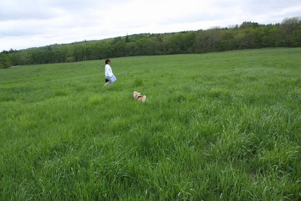 どこまでも広い緑の野原