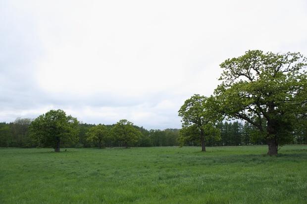 広大な牧草地