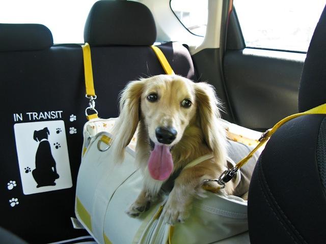 ドライブ大好き!
