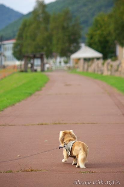 初めての散歩道