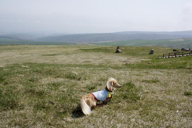 ナイタイ高原牧場にて(2008年5月)