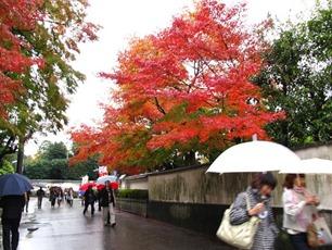 東福寺の参道